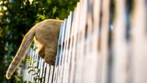 Creative, curious cat climbs through fence
